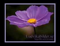 Cover for Ludvikabilder.se - Sagolikt och levande