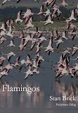 Cover for Flamingos